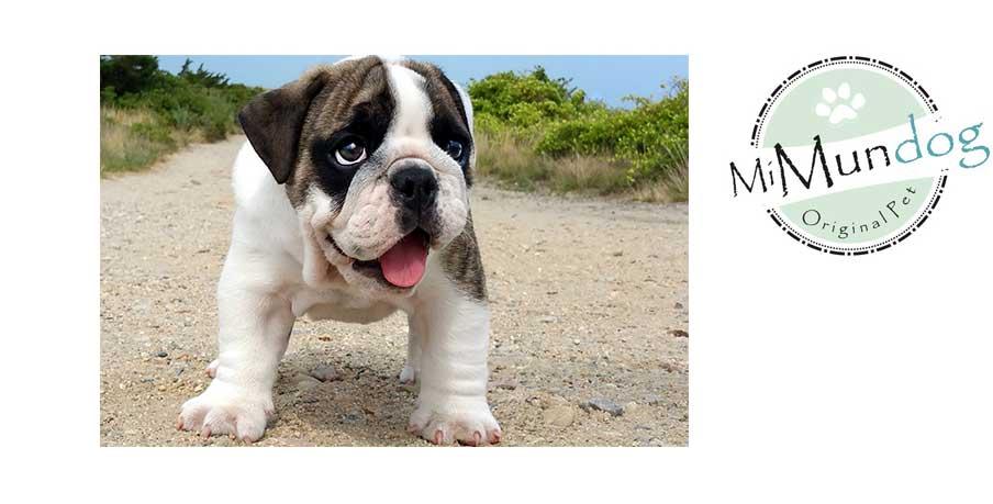 mi-mundodog1